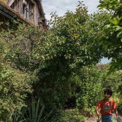 SUMM - Eine Abenteuerreise ins Bienenland - Kind im Garten
