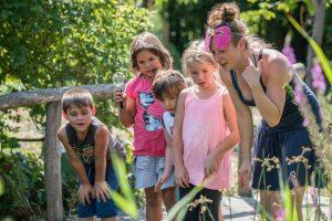 SUMM - Eine Abenteuerreise ins Bienenland - Bienen beobachten