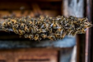 SUMM - Eine Abenteuerreise ins Bienenland - Bienenstock